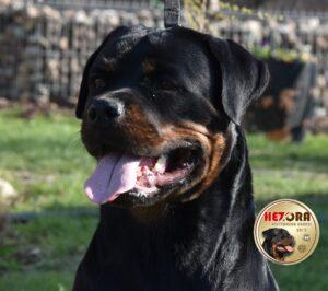 DUSZKA Hezora (20 months old)